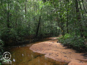 Sinharaja rain forest 2